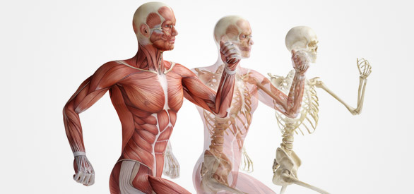sports-injury-image